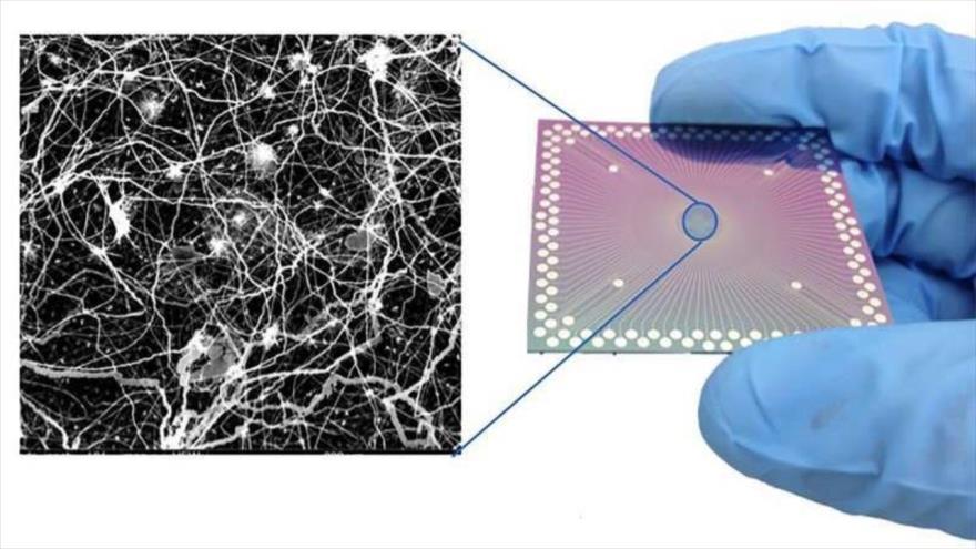 El dispositivo que emula al cerebro humano, tiene un diámetro promedio de solo 360 nanómetros.