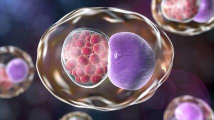 Bacteria clamidia, causa principal de la infertilidad femenina