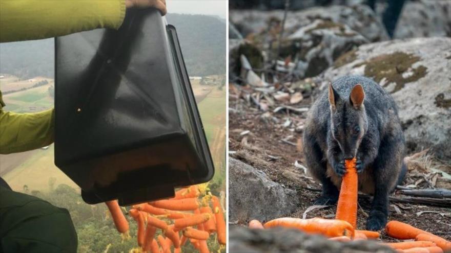 Vídeo: Lanzan verduras para hambrientos animales en Australia