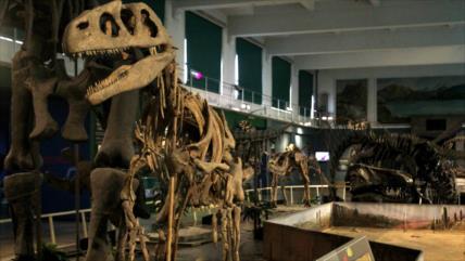 Vídeo: Vean fósiles de 'dinosaurios del fin del mundo' en Argentina