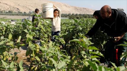 """""""Bloqueo israelí de exportaciones palestinas viola normas de OMC"""""""