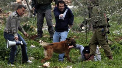 """Israel usa """"perro policía"""" para morder genitales de palestinos"""