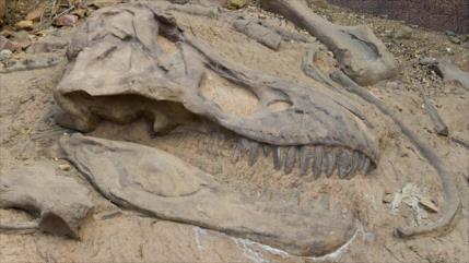 Descubren una especie aterradora de dinosaurio T-Rex en Canadá
