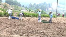 Campesinos hondureños urgen apoyo para salir de crisis alimentaria