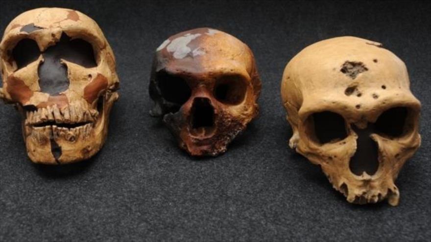 Según un estudio, los científicos plantean los antepasados de los africanos se aparearon con una especie arcaica que dejó su huella en el genoma actual.