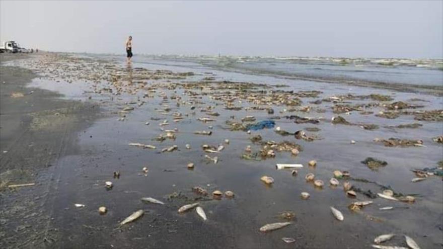 Peces muertos aparecen en la costa de Adén, en el sur de Yemen.