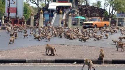 Vídeo: Monos hambrientos en Tailandia se pelean por una banana
