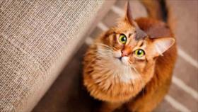 ¿Qué quieren decir los gatos a las personas con sus maullidos?