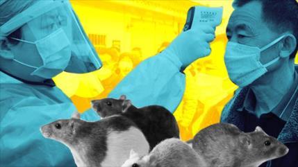 Hantavirus, el nuevo virus que tiene en vilo a China