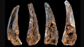 Un estudio revela qué alimentos comían los neandertales