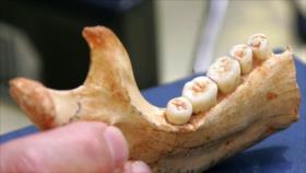 Científicos hallan un fósil humano de 800 mil años de antigüedad
