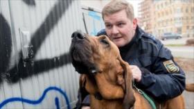 Los perros podrían detectar a los asintomáticos de la COVID-19