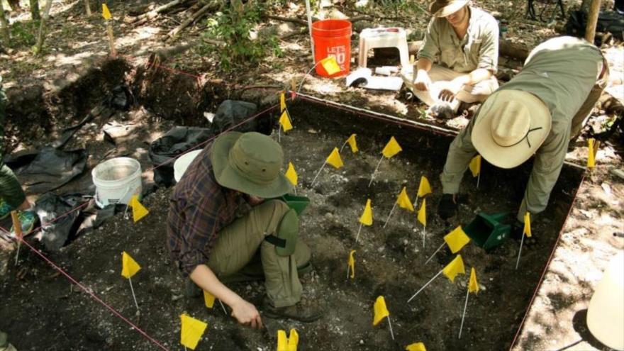 Investigadores hallan restos de un fuerte español hecho con caracoles en Mound Key, Florida.