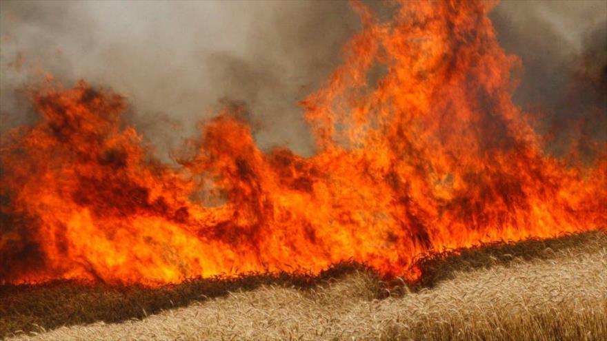 La imagen muestra cómo las llamas devoran un campo de cultivo de trigo.