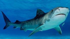 Vídeo: Avistan tiburón de más de 8 metros en las costas de España