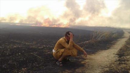 Informe: Trump ordenó quemar campos de trigo en Siria