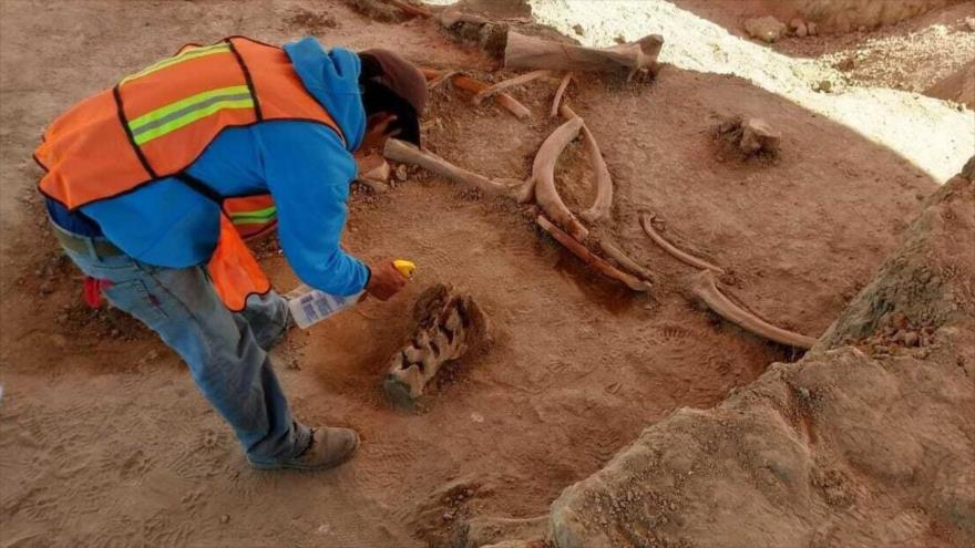 Un arqueólogo trabaja en el sitio donde se descubrieron los huesos de unos 60 mamuts en México.