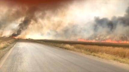 EEUU Y Turquía saquean y queman el trigo sirio