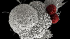Científicos crean un virus que ataca y mata las células cancerosas