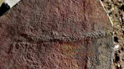 Hallan en Escocia fósil de un milpiés de hace 245 millones de años