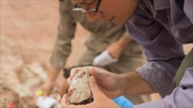 Hallan en Argentina fósil de un nuevo dinosaurio carnívoro con alas