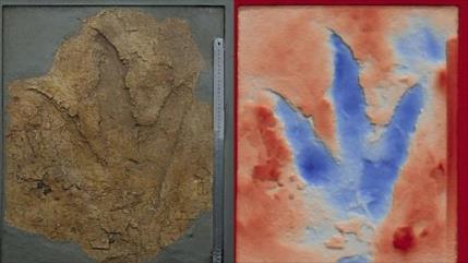 Hallan evidencia de dinosaurios carnívoros del Jurásico en Australia