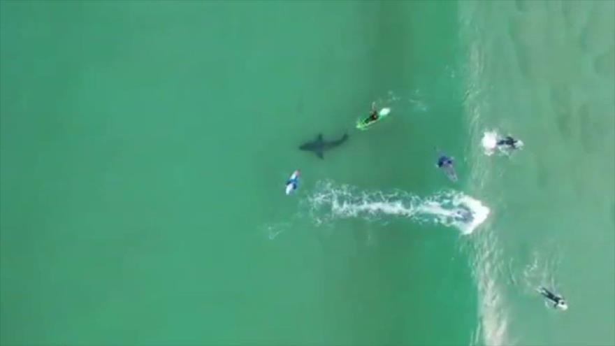 Vídeo: Tiburón gigante se acerca peligrosamente a surfistas