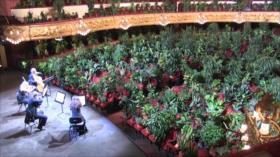 El Toque: Concierto Musical Para Plantas, Descubren Impresionante Pino de 1900 años en China