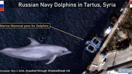 Foto: Rusia envió delfines entrenados a la guerra en Siria