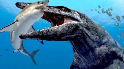 Hallan el dinosaurio más mortífero del período Jurásico en Chile