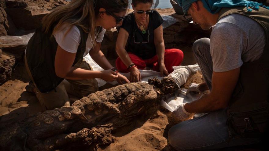 Arqueólogos trabajan con delicadeza en uno de los 11 cocodrilos encontrados en una necrópolis en Egipto.