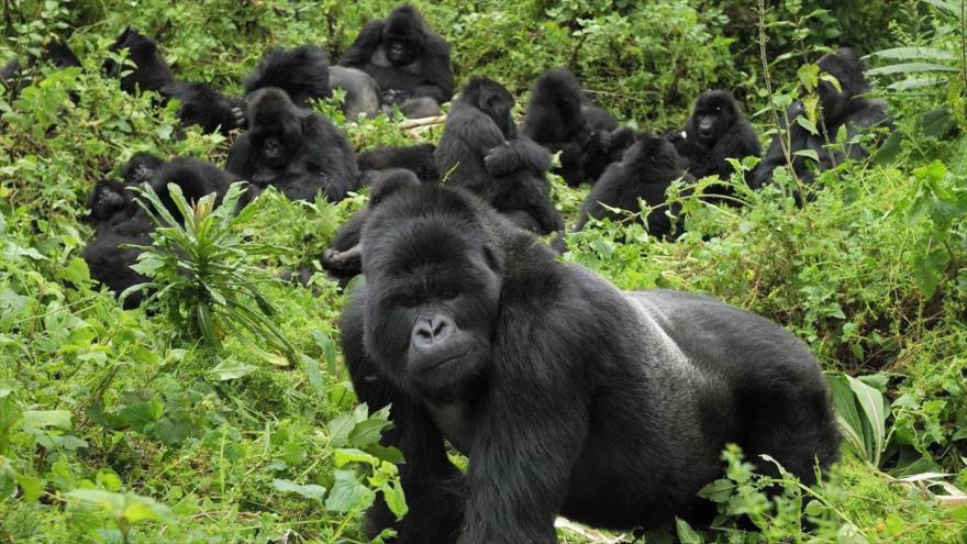 'Población mundial de mamíferos, aves, reptiles se redujo en 68%'