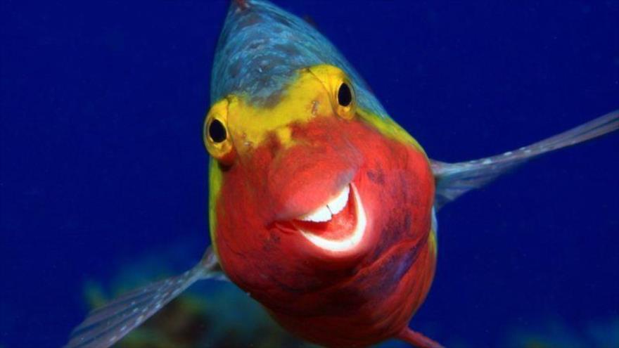 Las fotos más graciosas de animales en concurso Comedy Wildlife   HISPANTV