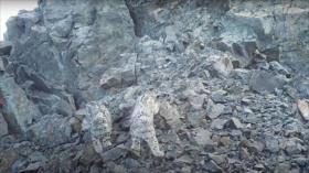 Vídeo: vean cómo un curioso cachorro de leopardo se hace un selfi