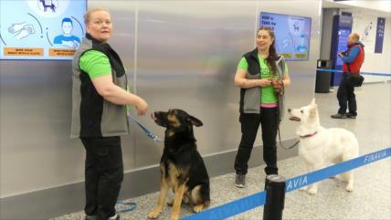 Perros en aeropuerto de Finlandia huelen COVID-19 en 10 segundos