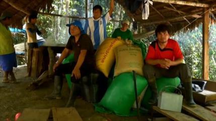 Casi 400 comunidades en Perú denuncian ley que vulnera la Amazonia