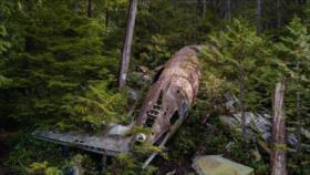 Mueren 2 pilotos estadounidenses tras estrellarse su avión en Alabama