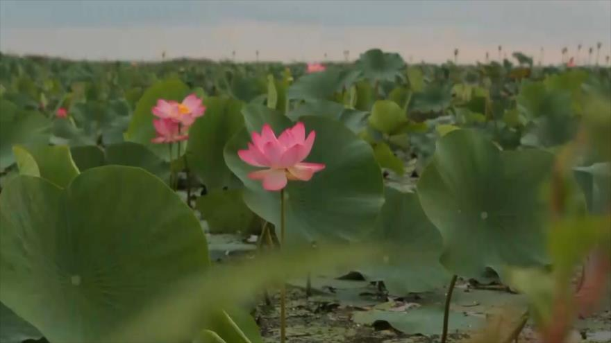 Irán: La laguna de Anzali, Mirza Kuchak Khan