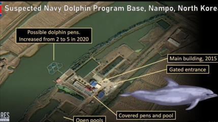 Fotos satelitales: Pyongyang entrena delfines para usos militares
