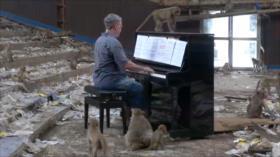 El Toque: 1- Mascarilla de chocolate 2- Construyen un buque de madera en Costa Rica 3- Concierto de piano para monos en Tailandia