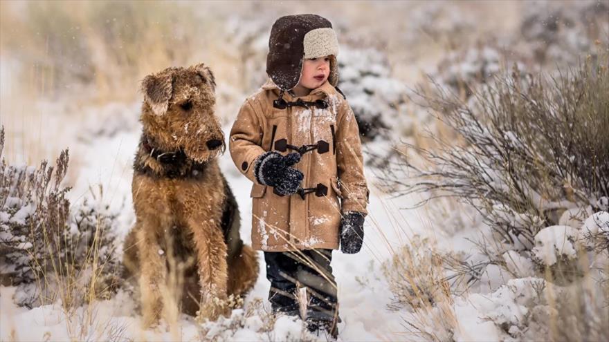Vídeo: Un perro salva a un niño del ataque de un lobo en Rusia