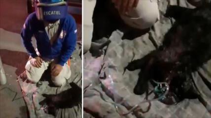 Brindan primeros auxilios a mascotas tras un incendio en México
