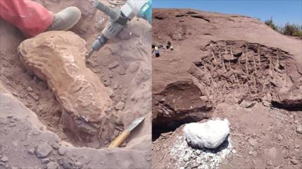 Hallan restos de dinosaurio de hace 140 millones de años en Argentina