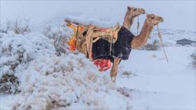 Asombrosas fotos de inusual nevada en desierto africano del Sáhara