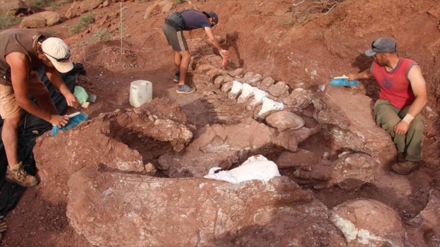 Paleontólogos descubrieron restos fosilizados de un titanosaurio de 98 millones de años en la provincia de Neuquén, en el noroeste de la Patagonia argentina.