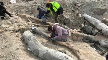 Hallan un árbol fosilizado de hace 20 millones de años en Grecia