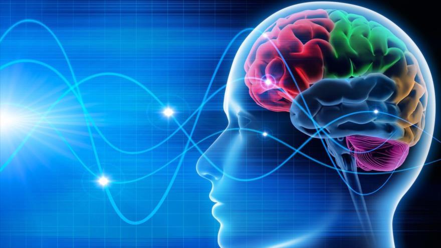 Los científicos lograran reactivar el cerebro de dos pacientes en coma mediante ultrasonidos.