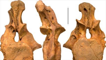 Descubren un nuevo dinosaurio de hace 90 millonesde años en Asia