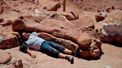 Hallan en Argentina el titanosaurio más antiguo jamás encontrado