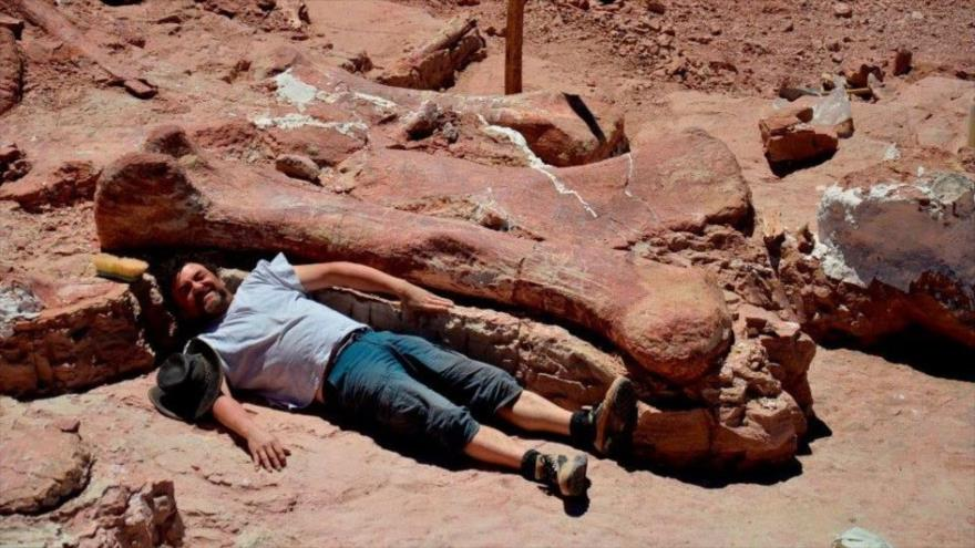 Encuentran en la Patagonia de Argentina un coloso de 20 metros de longitud que se convierte en la especie más antigua del mundo.